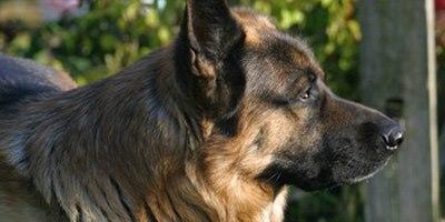 כלבים ורעשים (אילוסטרציה)