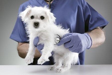 שגרת טיפול בכלב. צילום: shutterstock