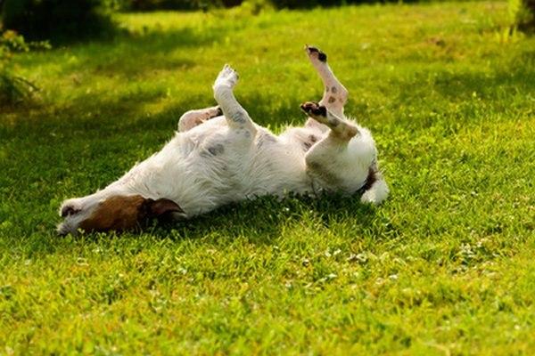 השתרעות על פני משטח צונן, כגון דשא, היא רצויה ומבורכת. צילום: שאטרסטוק