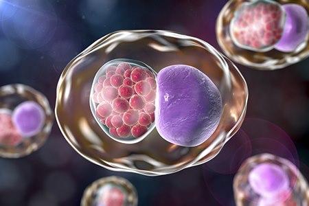 חיידקי כלמידיה (אילוסטרציה shutterstock)