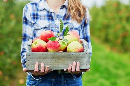 ערכים תזונתיים מבפנים ומבחוץ. אילוסטרציה