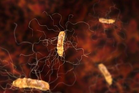 החיידק העמיד קלוסטרידיום דיפיצילה. צילום: thinkstock