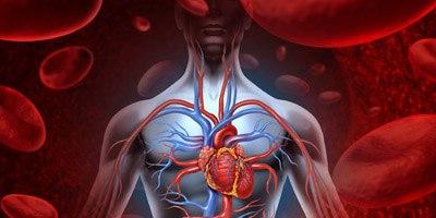 החלפת מסתם  בלב (אילוסטרציה צילום shutterstock)