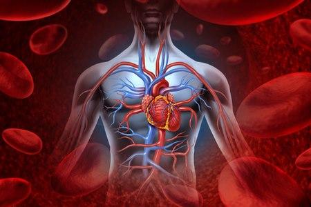 במצב של אי ספיקה, הלב לא מצליח לספק דם במידה לה זקוק הגוף. צילום: שאטרסטוק
