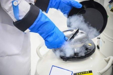 הביציות שנשאבות עוברות במעבדה תהליך הקפאה מהירה. צילום: שאטרסטוק
