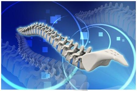 עמוד השדרה חשוף לתהליכי ניוון מתמשכים (אילוסטרציה shutterstock)