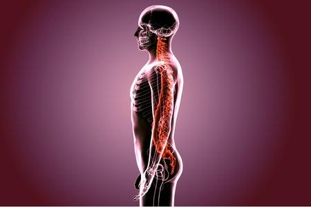 גידולים ראשוניים של עמוד השדרה הם נדירים. צילום: שאטרסטוק